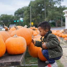 Pumpkin Patch Visits and Fall Family Traditions